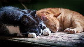 Siesta. Cat habits royalty free stock photo
