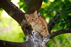 Siesta bonita del gato Foto de archivo libre de regalías