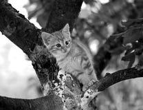Siesta bonita del gato Fotografía de archivo