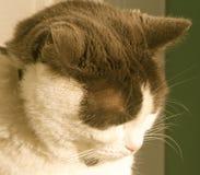 Siesta de Kitty Imagenes de archivo