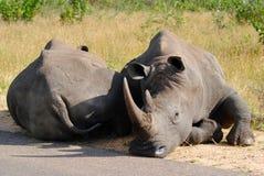 Siesta de la tarde - parque nacional de Kruger Fotos de archivo