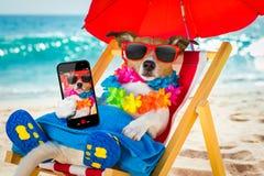 Siesta del cane sulla sedia di spiaggia Fotografie Stock Libere da Diritti