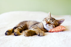 Siesta del gatito imágenes de archivo libres de regalías