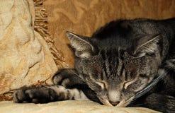 Siesta del gato Foto de archivo