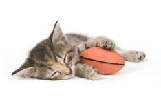 Siesta del gato Imagenes de archivo
