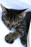 Siesta del gato Fotos de archivo