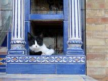 Siesta del gato en Sevilla Imagen de archivo libre de regalías