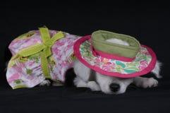 Siesta del perrito Imagen de archivo libre de regalías