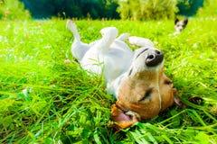 Siesta del perro en el parque imagen de archivo