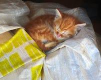 Siesta graziosa del gatto Fotografie Stock Libere da Diritti