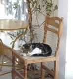 Siesta perdida del gato foto de archivo libre de regalías