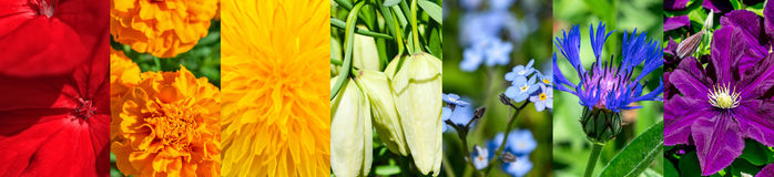 Siete colores florales abstractos del arco iris, collage panorámico Imagen de archivo
