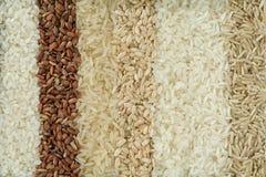 Siete diversas variedades de arroz se ponen en filas fotografía de archivo