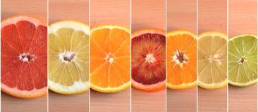 Siete diversos tipos de fruta cítrica dispuestos por tamaño Imágenes de archivo libres de regalías