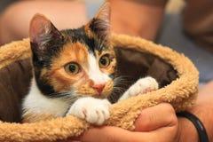 Siete meses del gatito coloreado multi Fotos de archivo