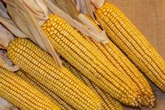 Siete oídos de maíz secado con las vainas tiraron en fondo de la arpillera imagen de archivo