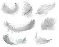 Siete plumas blancas libre illustration