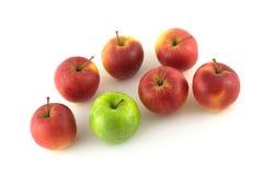 Siete primers rojos y verdes maduros de las manzanas Fotografía de archivo libre de regalías