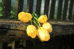 Siete tulipanes amarillos Ramo de tulipanes imagen de archivo