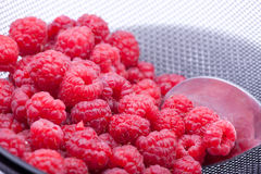 Sieving raspberries Royalty Free Stock Photo