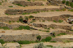 Sifnos. Particular designed farm on water scarcity Stock Images