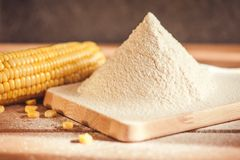 Sifted maize flour Stock Image