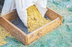 Sifting grain background Stock Photography