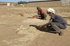 Sifting grain, Ethiopia Stock Photo