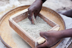 Sifting Grain Royalty Free Stock Photos