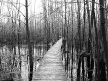 Sifton Bog Boardwalk Royalty Free Stock Image