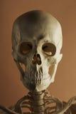 Sig. Bones Portrait Immagine Stock