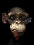 Sig. Chimp il protettore Immagini Stock Libere da Diritti