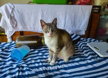 Sig. Oscar il gatto Fotografie Stock Libere da Diritti