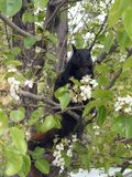 Sig. Squirrel Fotografia Stock