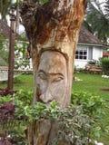 Sig. uomo dell'albero Fotografie Stock Libere da Diritti