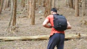 Siga al turista del hombre joven con la mochila que camina en el backpacker masculino del bosque que pasa a trav?s de la madera d almacen de metraje de vídeo