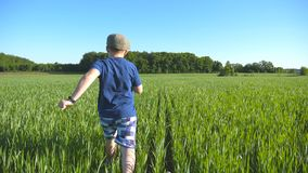 Siga ao menino feliz está correndo através do campo com trigo verde em um dia quente ensolarado Criança despreocupada no chapéu q vídeos de arquivo