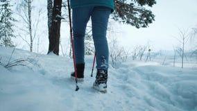 SIGA caminar femenino joven con una mochila en los palillos hermosos de las aplicaciones del bosque del invierno para caminar nór almacen de video