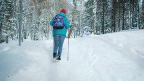 SIGA caminar femenino joven con una mochila en los palillos hermosos de las aplicaciones del bosque del invierno para caminar nór almacen de metraje de vídeo
