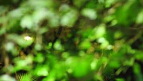 Siga el foco de algunos detalles del mangle en el bosque tropical en México metrajes