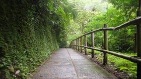 Siga el primer tiro de la opinión de la persona: Selva que camina Forest Path Cantidad a cámara lenta tranquila y despreocupada d almacen de video