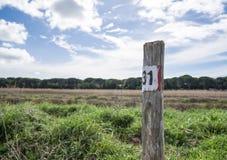 Siga o trajeto direito no selvagem Foto de Stock Royalty Free