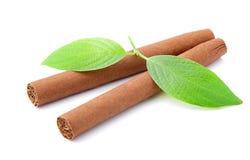 Sigaren Royalty-vrije Stock Afbeeldingen