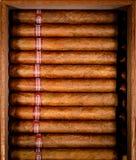 Sigaren in humidor Royalty-vrije Stock Afbeelding