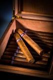 Sigaren in humidor Stock Foto's