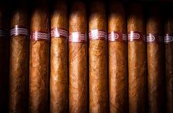 Sigaren in humidor Stock Afbeelding