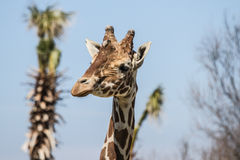 Sigean African Reserve Royalty Free Stock Images