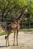 Sigean-Afrikaner-Reserve Stockfoto