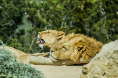 Sigean afrikansk reserv Royaltyfri Fotografi