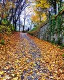 Sighisoara no outono Fotografia de Stock